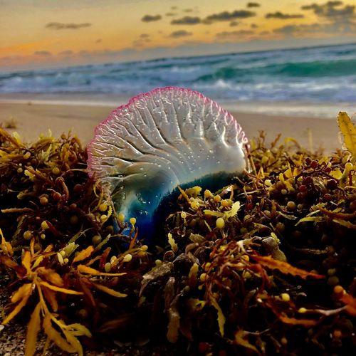 Close-up of jellyfish on beach