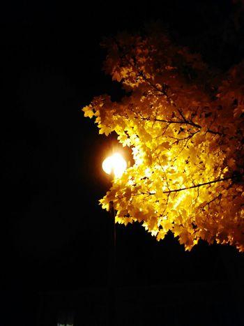 Autumn Illuminated Night Yellow Leaves Nature