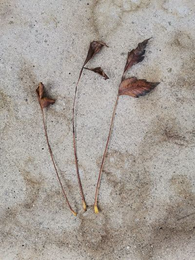 High angle view of dry leaves on sand