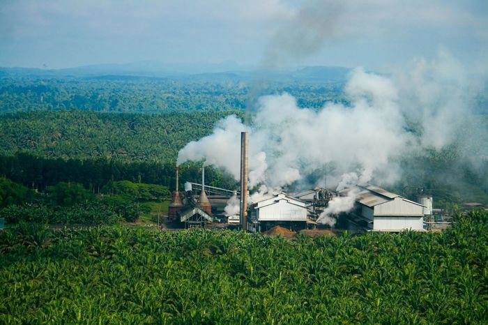 Palm oil mill in operation within oil palm plantation Agriculture Cooking Estate Factory Fruits Harvest INDONESIA Industrial Industry Malaysia Mill Oil Oil Palm Palm Palm Oil Plantation Processing Supply Tree