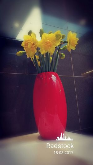 Radstock Flower Yellow Red Nature Indoors  Freshness Bouquet Daffodils Flowers Bathroom