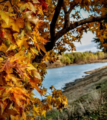 some days are perfect Tree Water Leaf Autumn Lake Branch Change Sky Close-up Maple Tree Autumn Collection Foreground Countryside Maple