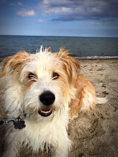 Benji Dog Beach Balticsea