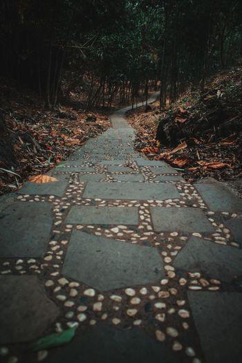 Cobblestone street in forest