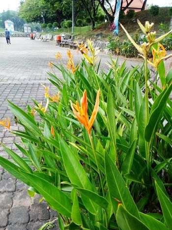 Leaf Nature Orange Color Day Beauty In Nature Growth Outdoors Plant Flower No People Close-up Freshness