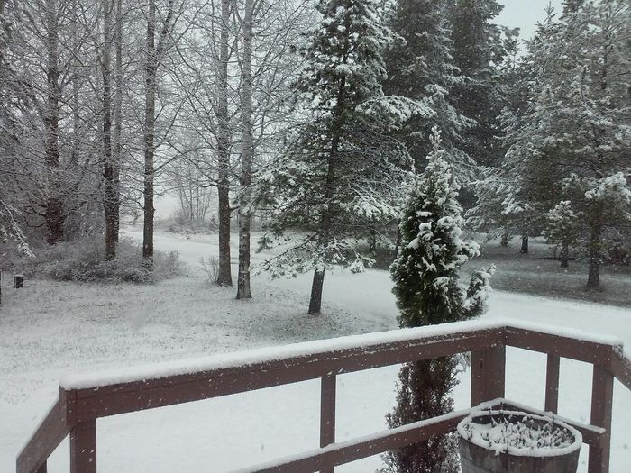 Today Stupid Snow just woke up and this is what happened 👎👎👎 Sandpoint