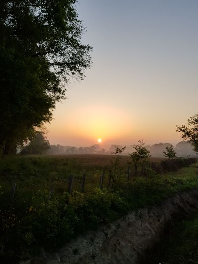 Good morning.. wake up 😊 Sunrise Morning Sun Early Morning France Clear Sky Nature Tree Beauty Rural Scene Agriculture Tree Area Sunlight Fog Hill Social Issues Visual Creativity