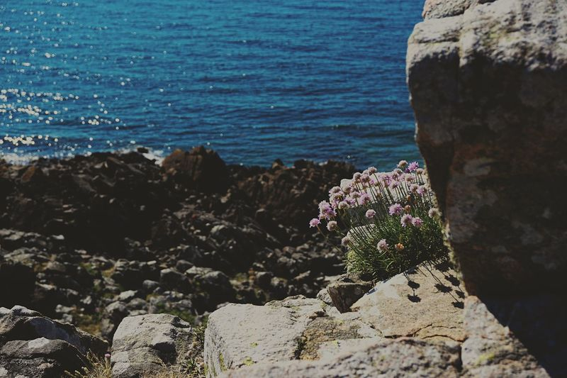 Sweden Sea Water Rock Beauty In Nature Rock - Object Solid Nature Beach Land Sunlight Tranquility No People Rock Formation Scenics - Nature Tranquil Scene Day Plant High Angle View Flowering Plant Outdoors