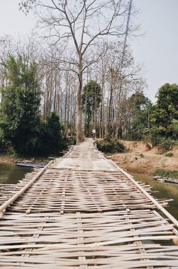 Laos Photography Backpack Travel Destinations Road Travel Tree Plant The Way Forward Direction Day Nature Diminishing Perspective Footpath No People Wood - Material Empty Growth Boardwalk Architecture Sky Outdoors Tranquility vanishing point Beauty In Nature Transportation
