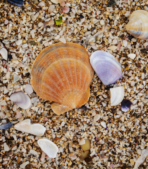 Animal Shell Animal Themes Autumn Brown Close-up Day Gastropod Leaf Nature No People Outdoors Pebble Rock - Object Seashell