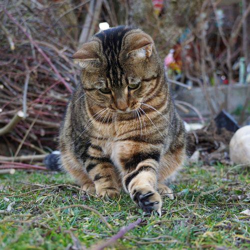 Cat Animal Themes Animal One Animal Mammal Vertebrate Domestic Animals Cat