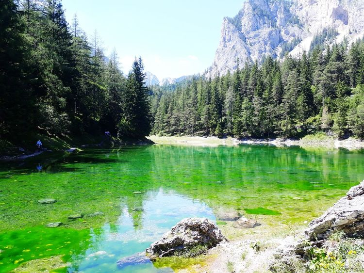lake, trees & mountains Mountain Theme Themes Aussicht Summer Summertime Green Lake Grün See Natur Steiermark Austria Sun Grüner See Tragöss Holiday Sunny Clear Sky Colourful Vacations Vacation Colors Water Tree Nature Day Outdoors No People Beauty In Nature EyeEmNewHere