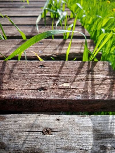 High angle view of lizard on boardwalk