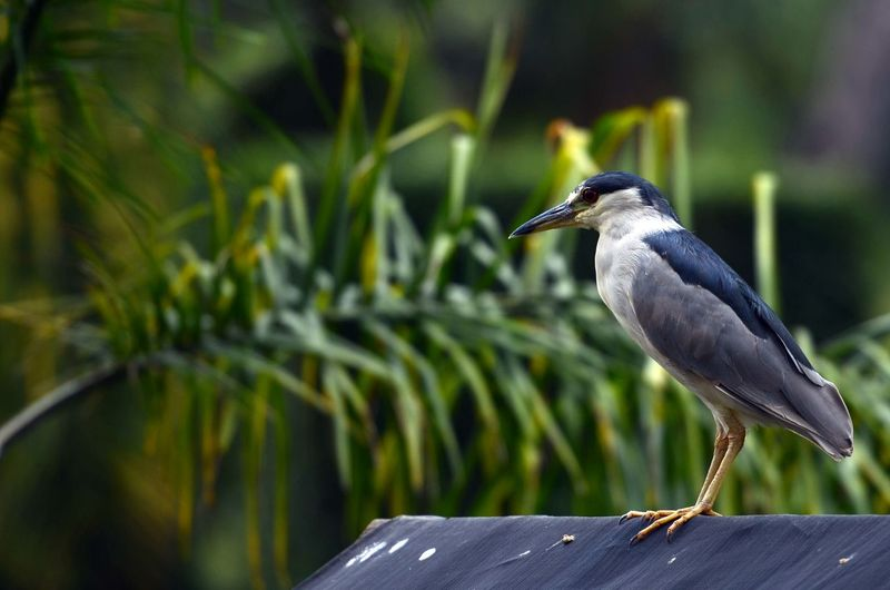Close-up of gray heron perching on a plant