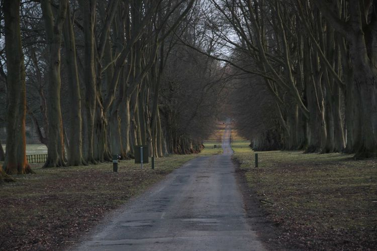 Pathway Along Trees