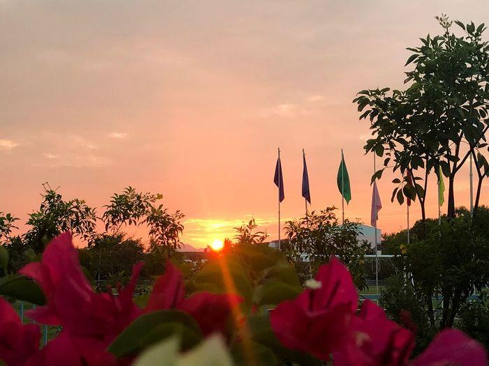 After school🌄 ตากพิทยาคม จังหวัดตาก ตาก School Photography Plant Sunset Tree Sky Nature Growth Beauty In Nature Sunlight Sun Flowering Plant