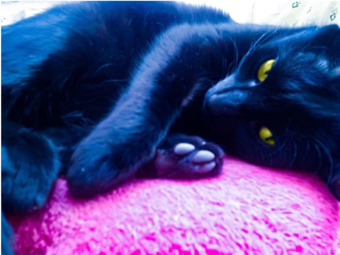 Cat Chillout Pets Domestic Animals Animal Themes One Animal Black Color Indoors  Relaxation Close-up Bed Day Moments Hapy Day Chillout Cat Life Cat Pink Color Feline No People Cat♡ Cats Cats Of EyeEm Cat Lovers Neon Color Neon Life Neon Pink