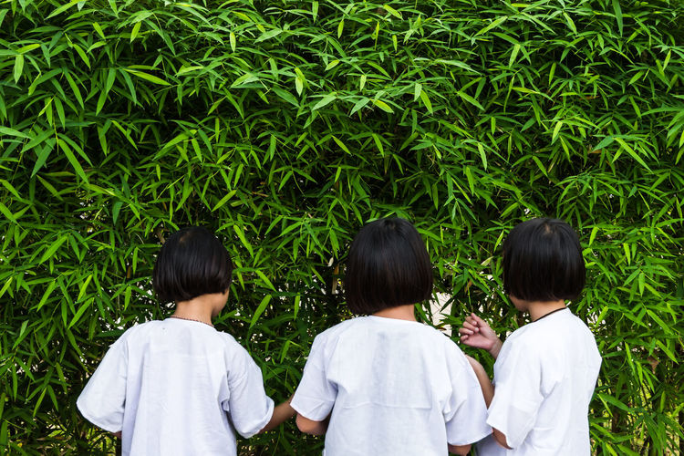 Three asian children wear a pure white dress are exploring bamboo leaves by pick it up and tasting. Kids Learning Bamboo Casual Clothing Child Childhood Cute Day Females Friendship Girls Green Color Group Of People Growth Innocence Leaf Males  Nature Outdoors Plant Real People Rear View Sister Togetherness White