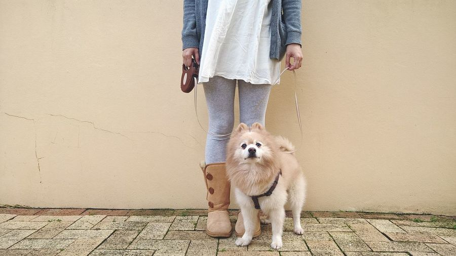 Woman And Dog Standing On Street Against Wall