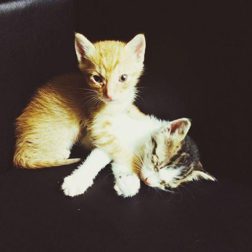 哥倆好 Enjoying Life Cat Cute Family