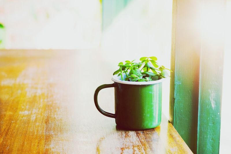 Plant in cup