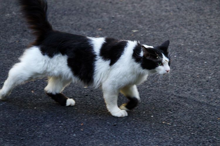 High angle view of cat standing on street