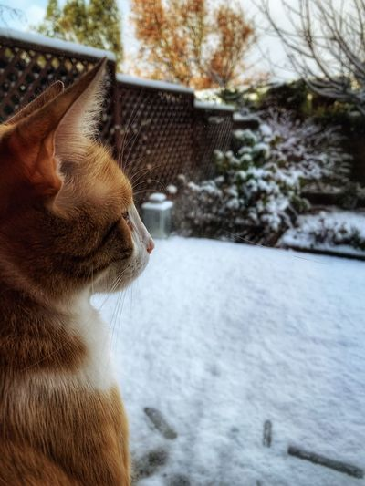 Cat Lovers Cats Of EyeEm Snow Winter Cold Temperature Cat
