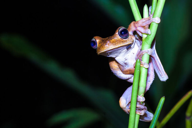 Animal Themes One Animal Animal Animal Wildlife Animals In The Wild Close-up Plant Nature Vertebrate Animal Body Part Frog Outdoors Beauty In Nature Eye Animal Eye Focus On Foreground No People Macro