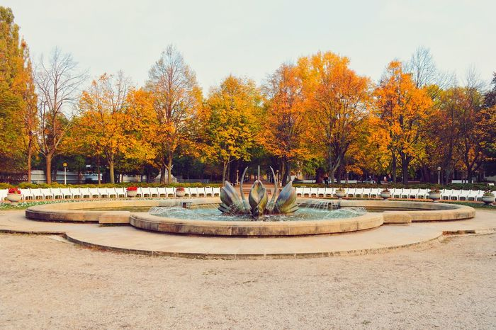 Autumn Trees Treescollection Autumn Colors Nature Beauty In Nature Growth Outdoors No People City City Street Street Colorful Environment Cityexplorer The Week On EyeEm City Park
