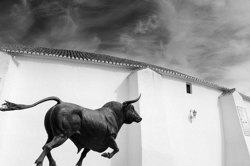 Plaza de Toros de Ronda (Málaga) Animal Themes Built Structure Street Photography Streetphotography Photojournalism Photographer Toros Ronda Plazadetoros Fuji Fujifilm_xseries Fujifilm Photooftheweek Photooftheday Photography X100f Blackandwhite Blancoynegro Streetphoto_bw Bull Esfujifilmx FujiFilm X100 Fujistas