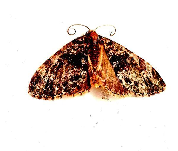 Maximum Closeness Close-up Macro Insects Moth Windowcollection Tinymoth Onmywindowsill