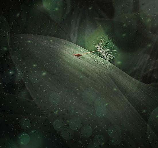 Invertebrate No