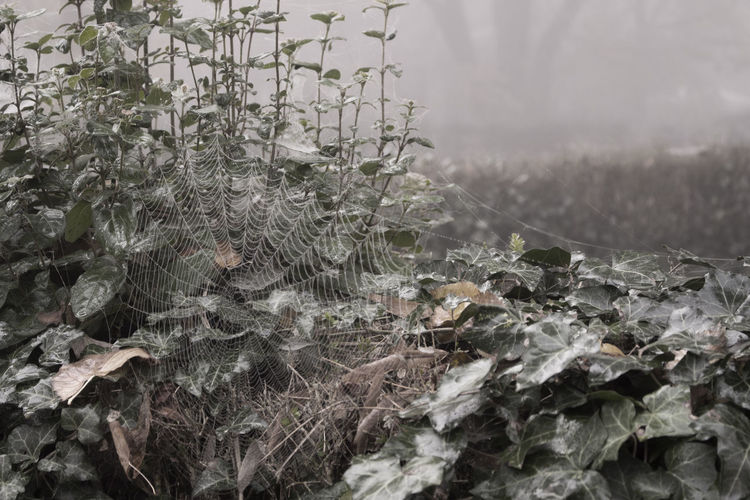 Nature No People Cold Temperature Selective Focus Outdoors Beauty In Nature Tranquility Leaf Fragility Spiderweb