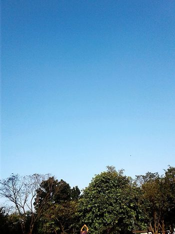 Blue Copy Space Clear Sky Tree Sky Nature Growth Low Angle View No People Day Outdoors