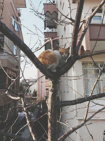 Cat Catlover
