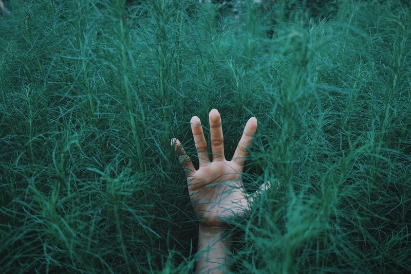 Goodbye Hello Put Your Hands Up Help Plant Human Body Part Human Hand Hand One Person Growth Nature Green Color Finger Outdoors Grass Real People Field Body Part Lifestyles