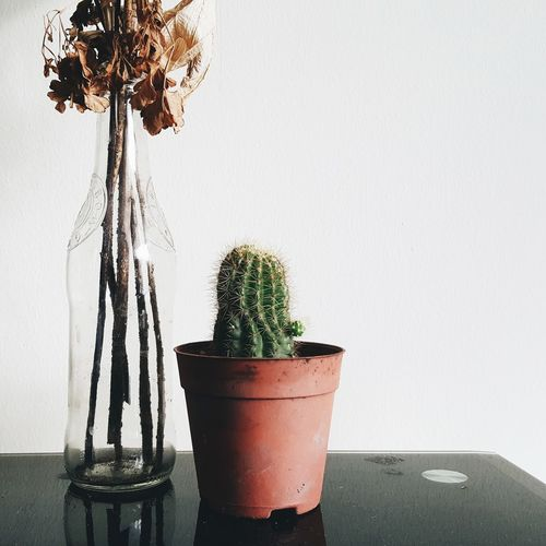 Plant Solitary