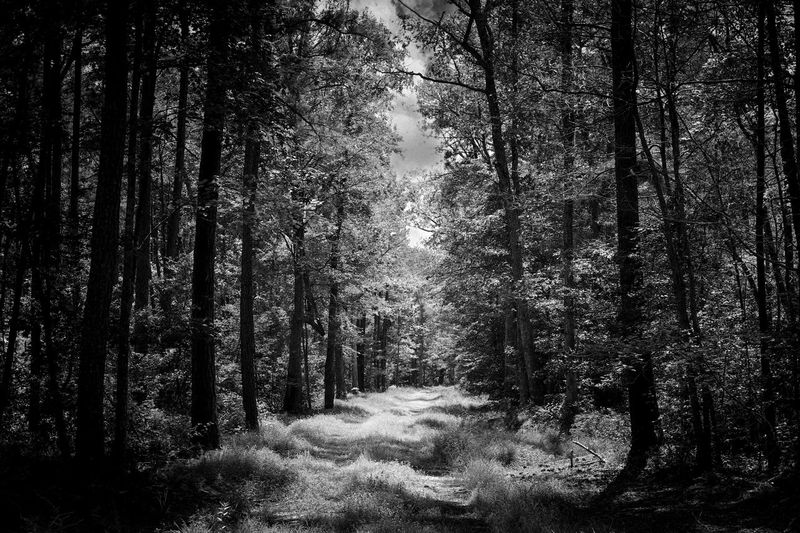 Black and white Pathway In The Forest Pathway Backgrounds Dark Outdoor Photography B & W  Black And White Landscape Beauty In Nature Blackandwhite Tree Plant Forest Land Growth Nature No People Tranquility Beauty In Nature WoodLand Day Non-urban Scene Outdoors Sunlight Branch Idyllic Tranquil Scene Scenics - Nature Foliage Coniferous Tree
