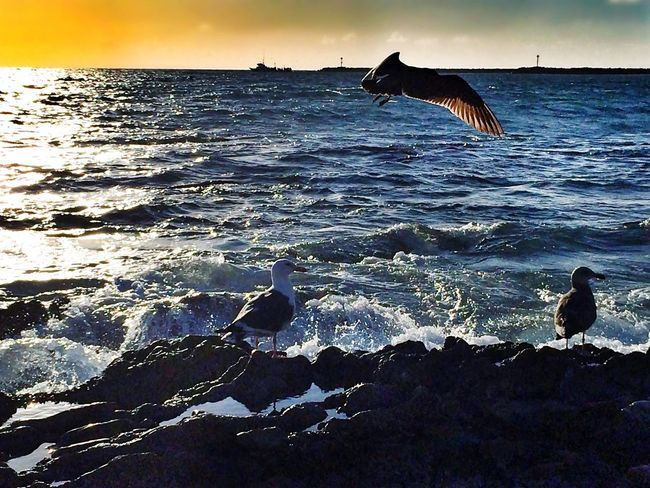 """""""Believe in me...cuz I was made for chasing dreams..."""" Life Is A Beach Sunset_collection Sunset Beach Photography Ocean Dream Eye4photography  EyeEm Best Shots"""