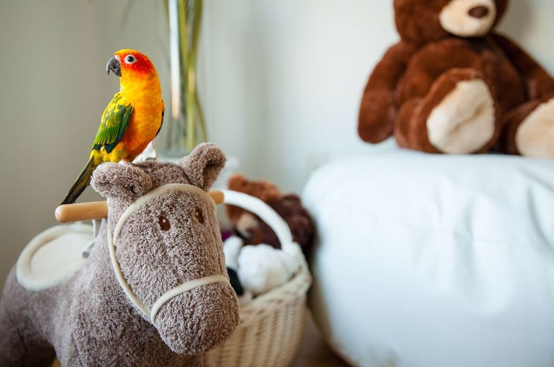 Close-up of parrot perching on stuffed toy at home