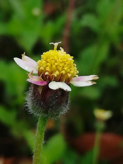 Natural Beauty Nature Na Small Flowers Flower Nature