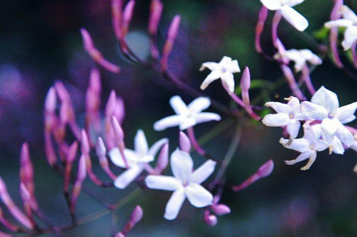 Rain Flower Afloat Deturmained Blum Deep