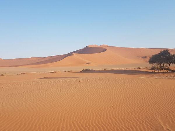 EyeEm Selects Sand Dune Early Morning Namib Desert Sossusvlei Landscape Desert Sand Scenics Drought Beauty In Nature
