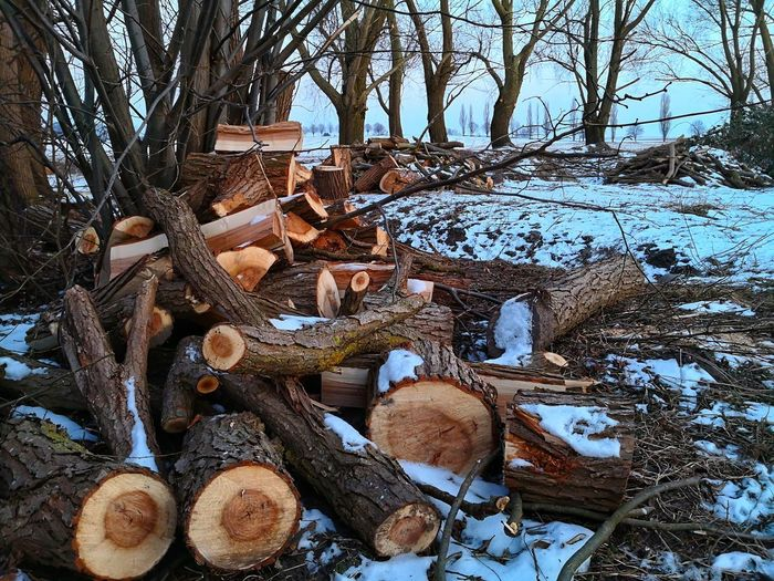 Huawei Photography Huaweimate10pro Winter Landscape Woodpile Firewood Firewood In The Snow Stack Day Tree Nature No People