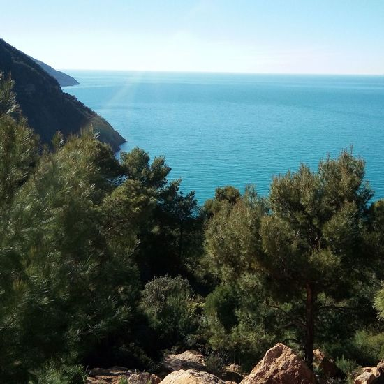 Beauty In Nature Relaxing Moments Mediterranean  Tree Seascape Calm Tranquil Scene