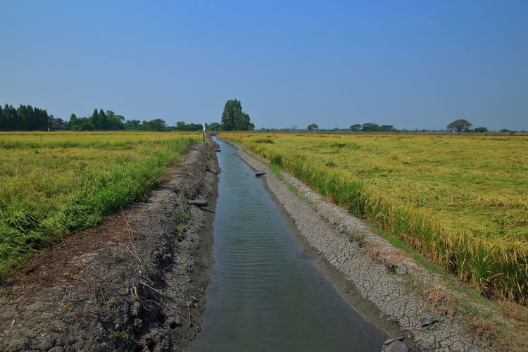 Earth ditch irrigation canal feeding water to paddy fields.
