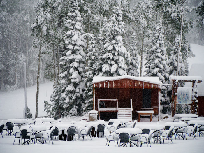 Architecture Beauty In Nature Built Structure Chairs Cold Temperature Day Evergreen Trees Nature No People Outdoors Park City, Utah Ski Skiing Snow Snow Covered Snow Covered Trees Tables Tables And Chairs Tree Trees Utah Winter