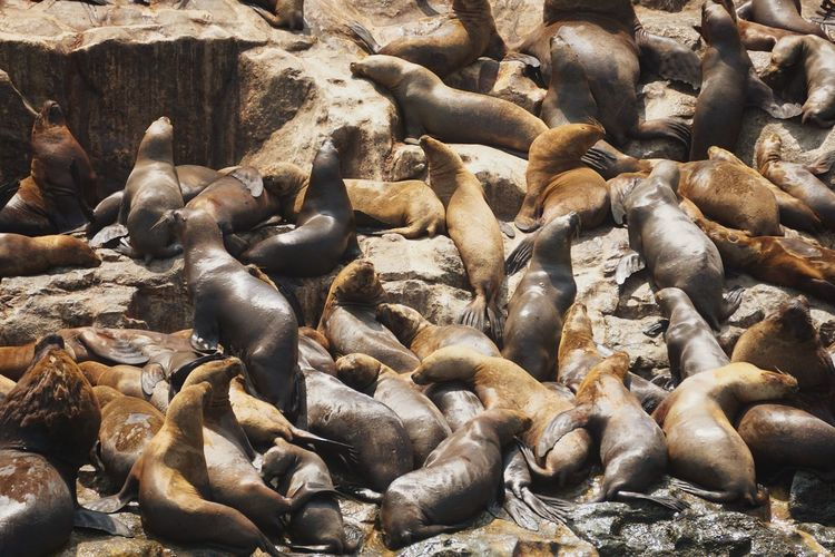 We took a boat to the island where the sea lions lived. we saw caves and groups of massive sea lions