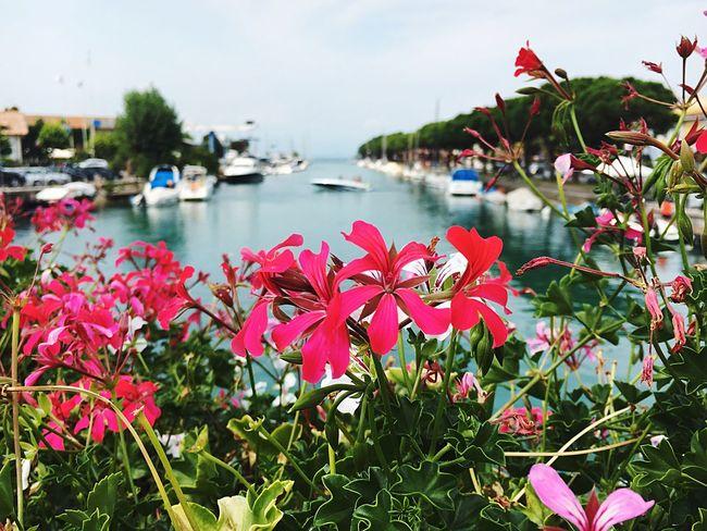 Flower Colourful Italia