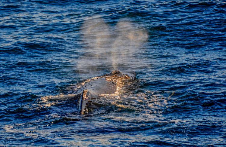 Antarctica Rockhopper Penguins Whale Iceberg Penguin Whale Fluke Whale Watching Ziseetheworld Ziwang